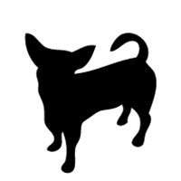 Chihuahua #1