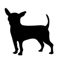 Chihuahua #2