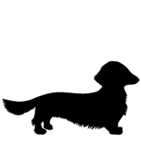 Dachsund (Long Haired)