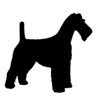 Fox Terrier (Wirehaired)