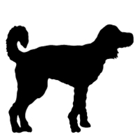 Goldendoodle (Curved Tail)