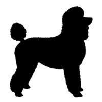 Poodle (Sport Clip)