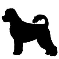 Portugese Water Dog (retriever cut)