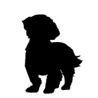 Shih Tzu (puppy cut)