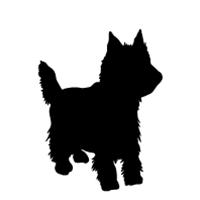Yorkie (puppy cut)
